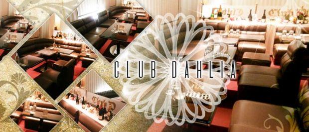 Club Dahlia[クラブ ダリア] バナー
