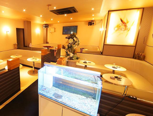 Club Cecil [クラブ セシル](川崎キャバクラ)のバイト求人・体験入店情報Photo2