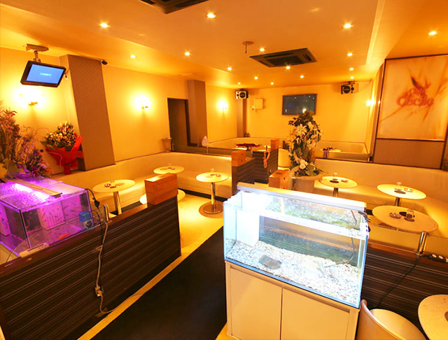 Club Cecil [クラブ セシル](川崎キャバクラ)のバイト求人・体験入店情報Photo4