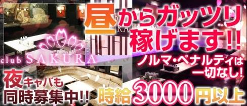 Club SAKURA(サクラ)【公式求人情報】(京橋昼キャバ・朝キャバ)の求人・バイト・体験入店情報