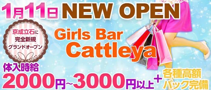 Girls Bar Cattleya<カトレア>(亀有ガールズバー)のバイト求人・体験入店情報