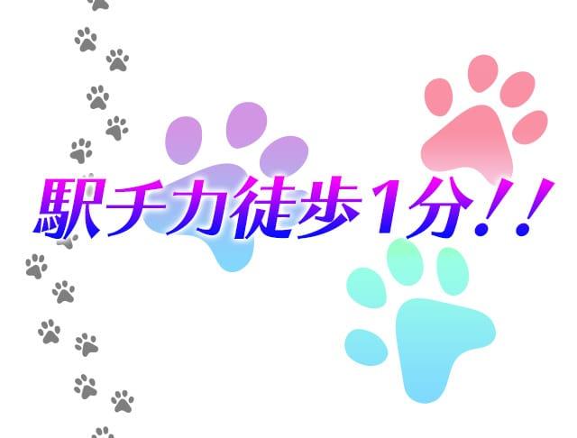 Girl's bar DO or DO<ドゥオアドゥ> 新橋 ガールズバー SHOP GALLERY 3